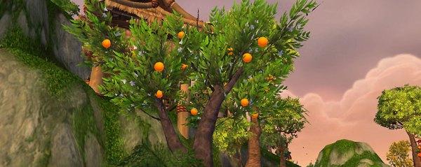 orange tree - the tillers