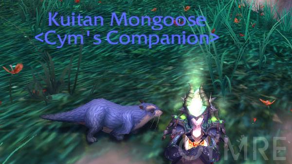 Kuitan Mongoose