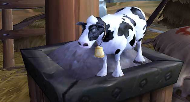 The Tale of the Pygmy Cow