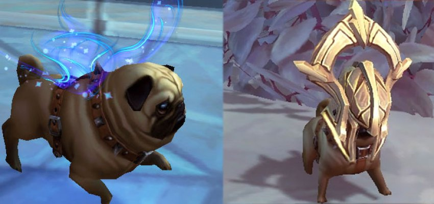Pug Faerie Wings Ascended costumes