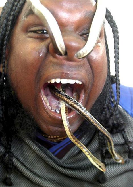 snakes through the nose