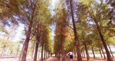 【台南景點】置身於國外的美景,就在六甲落羽松森林
