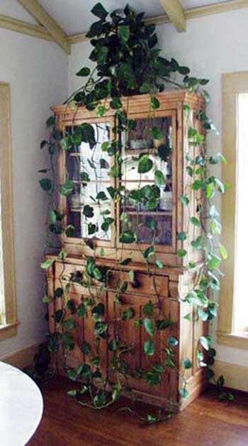Plantas ideales para los interiores de la casa  Jardin  Decora Ilumina