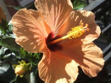 Plantas y flores de otoo  Jardin  Decora Ilumina