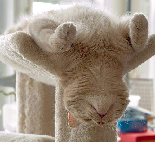 22 Funny Sleeping Cat Pictures  Design Swan