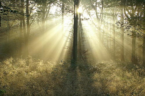 Breathtaking Sunbeams Photography