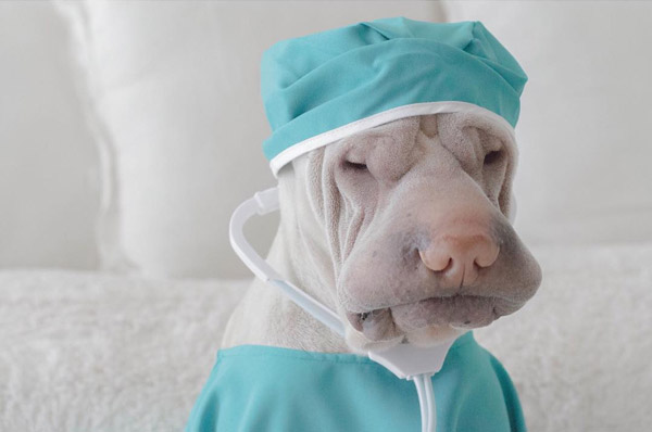 Paddington Adorable Shar Pei Wear Costumes with a Stoic Expression  Design Swan