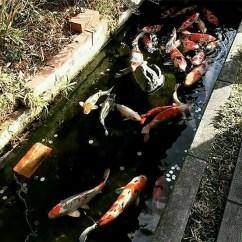 Bird Nest Chair Rattan Side Koi Fish In Drainage Canal Japan – Design Swan