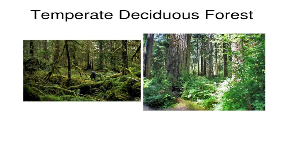 They play a huge role in the ecosystem, because they determine the conditions in which the organisms live in and will need to adapt to. Temperate Deciduous Forest Boreal Forest Ecosystem