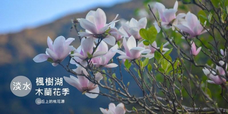 淡水景點 |  來天元宮賞櫻千萬別錯過的秘境桃花源 楓樹湖木蓮花季 行程、交通方式與周邊景點
