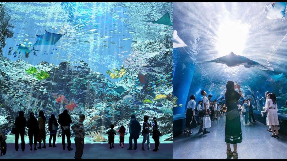 最美水族館換人當?桃園「國際級水族館」X park近4層樓透明觀景窗,成日本首座海外水族館! 噪咖 EBCbuzz