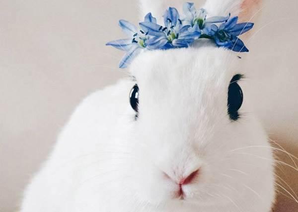 這隻自備眼線的女神兔兔,烏溜溜大眼配上雪白肌根本是「兔界小咘咘」呀!|噪咖 EBCbuzz