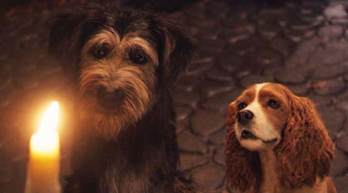 The style of the real action reduces the complexity of emotions seen on the faces of the dogs in 'lady and The tramp'