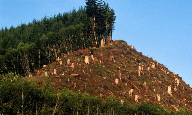 Resultado de imagen para deforestacion