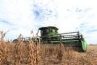 Área plantada com grãos nas sete fazendas do Grupo Amaggi corresponde a quase duas vezes a superfície da cidade de São Paulo