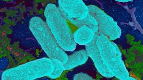 De acordo com o estudo, cada pessoa lança ao ar, a cada hora, milhões de bactérias diferentes