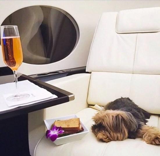 Sly Vilarinhorelaxa no voo de Miami para Las Vegas