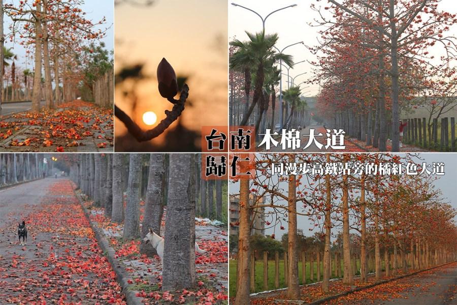 台南 一同漫遊木棉花道,高鐵站旁的橘紅色大道 台南市歸仁區|歸仁十五路木棉花道
