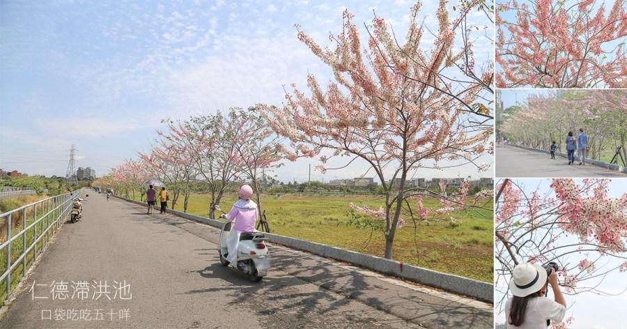 台南 華醫湖畔粉戀花旗雨隨風飄落,讓華醫湖畔步道染上一層戀愛般的粉紅色 台南市仁德區|仁德滯洪池花旗木