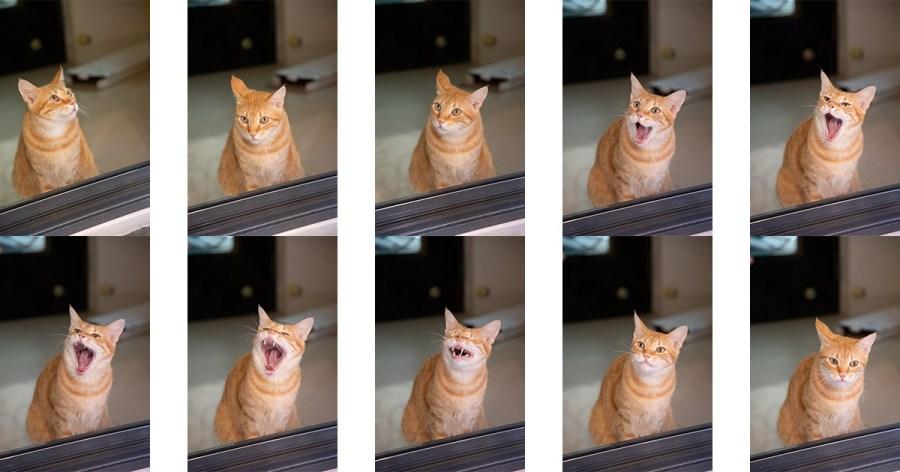 拍貓拍狗怎麼拍才不會晃,毛小孩拍照要訣,拍毛小孩時,拍攝定點做動作的毛小孩時,室內拍攝相機設定參數怎麼設?