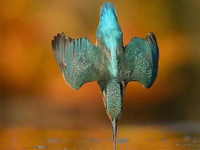 kingfisher after 6 years
