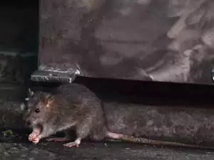 Hantavirus: What is Hantavirus? How is it caused? All you need to ...