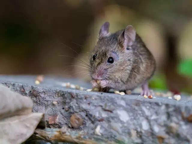 Spread - Hantavirus in China: 5 things you need to know about the ...