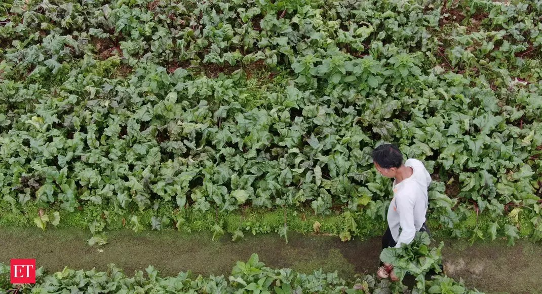 Interest subvention on crop loans extended till August 31