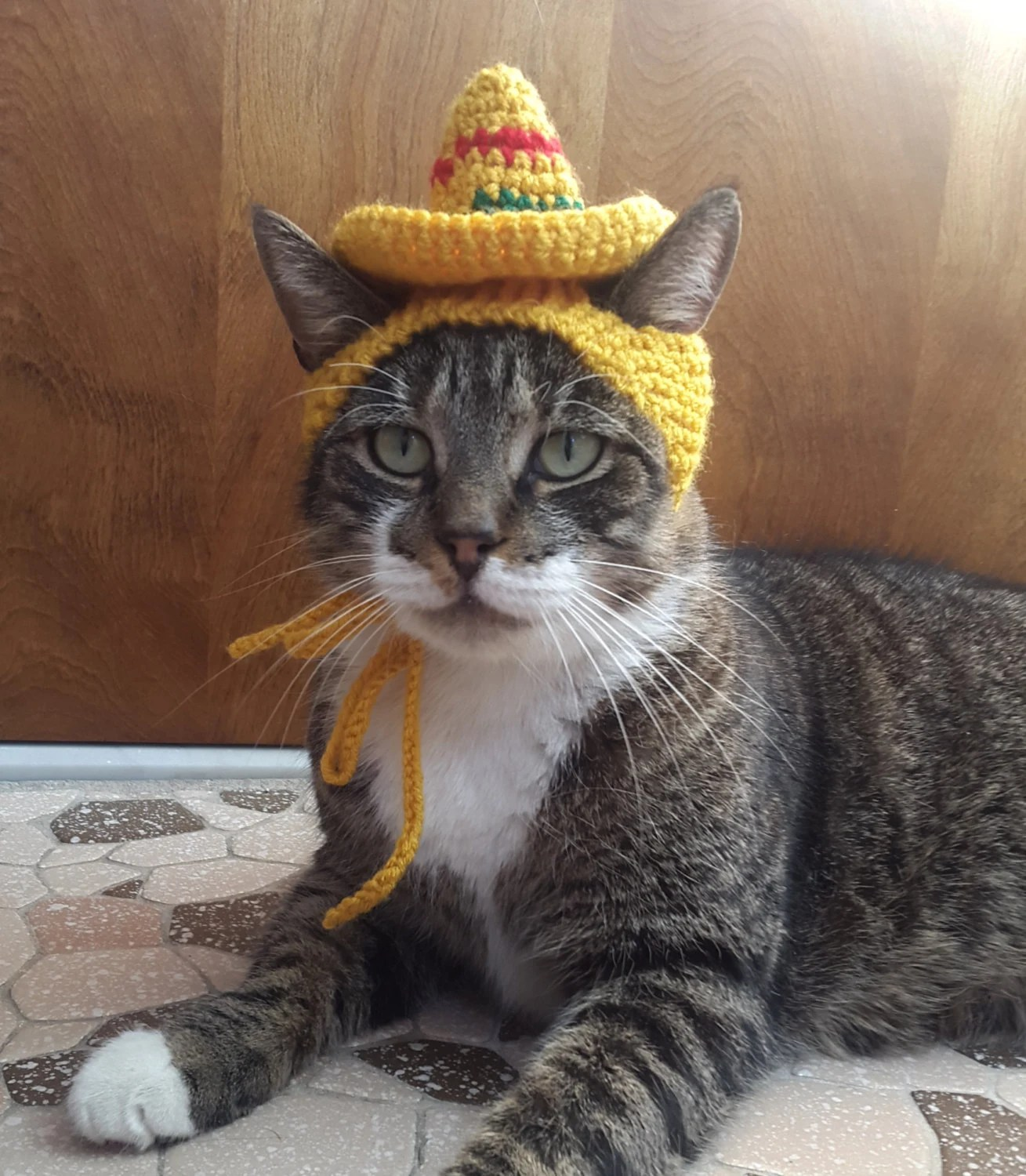Sombrero Cat Hat Knit Hat For Cat Cat Costume Halloween