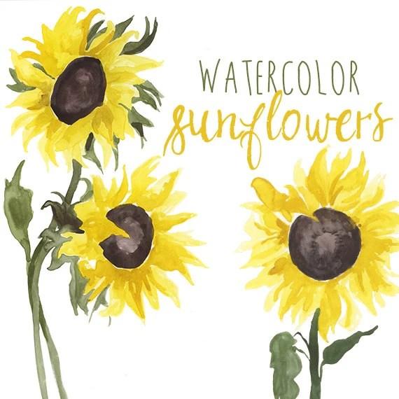 watercolor sunflower clip art floral