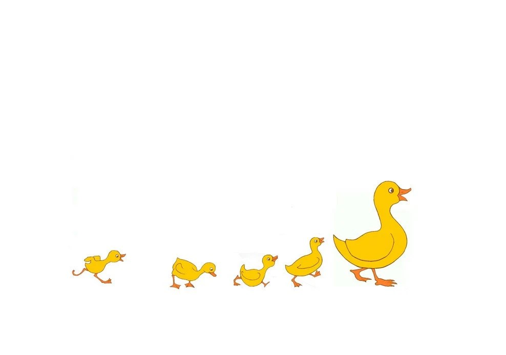 nursery duck and ducklings. yellow
