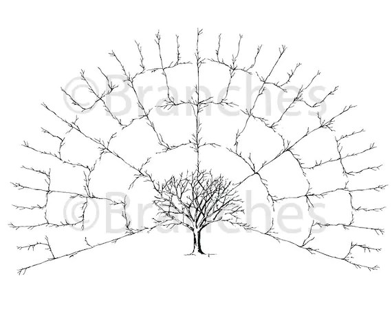BLANK 5 Generation Family Tree Fan Chart Digital File Only