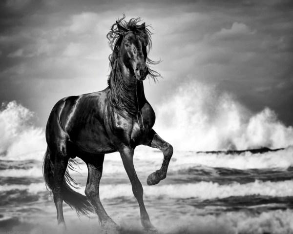 Wild Horse Print Black Stallion Art