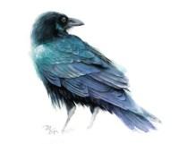 Raven Art Print Watercolor Giclee Print. Raven Illustration