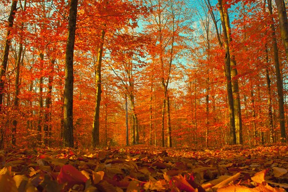 Free Fall Tree Wallpaper Landscape Photography Red Leaves Autumn Forest Fall Colors