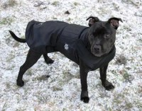 Made to measure dog coats by Pepper Petwear by PepperPetWear