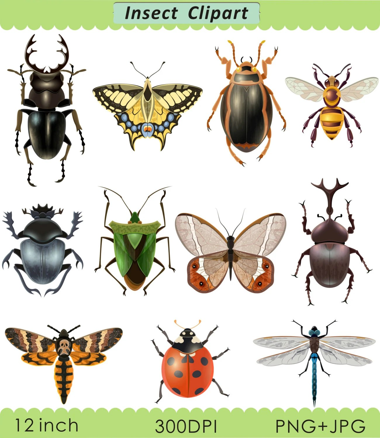 insect clipart clip art