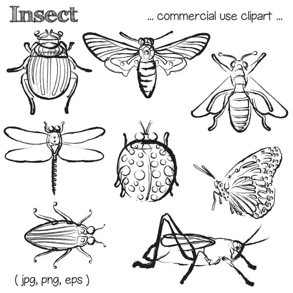 insect clipart bug