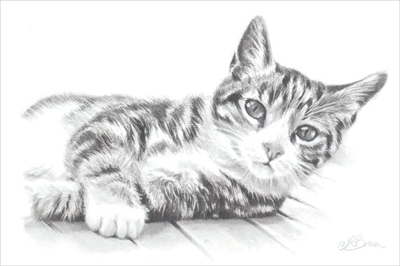 Tabby Cat Cat Art Print Pencil Drawing of a Cat. Gift for