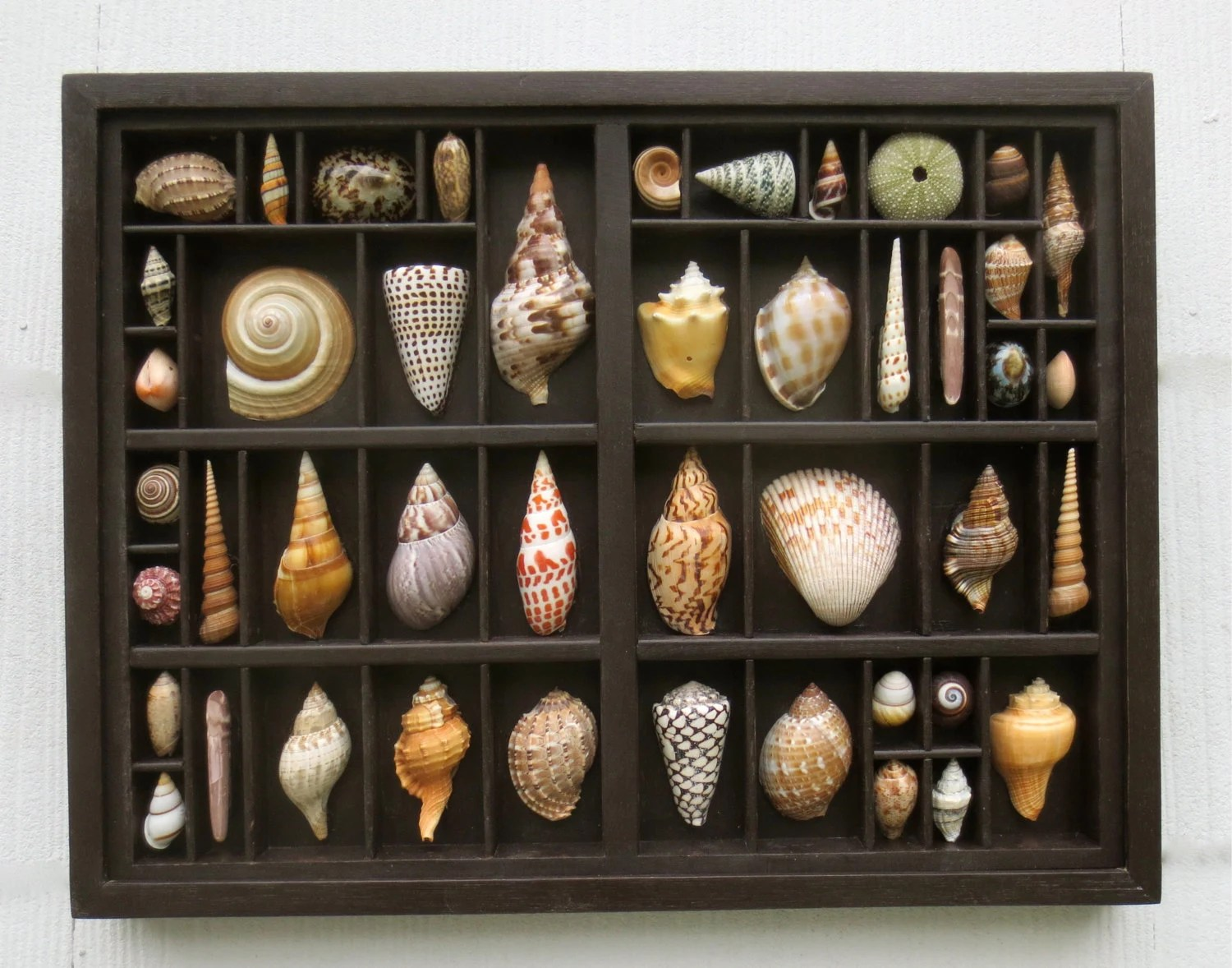 Seashell Art Mixed Media Assemblage A Seashell Collection
