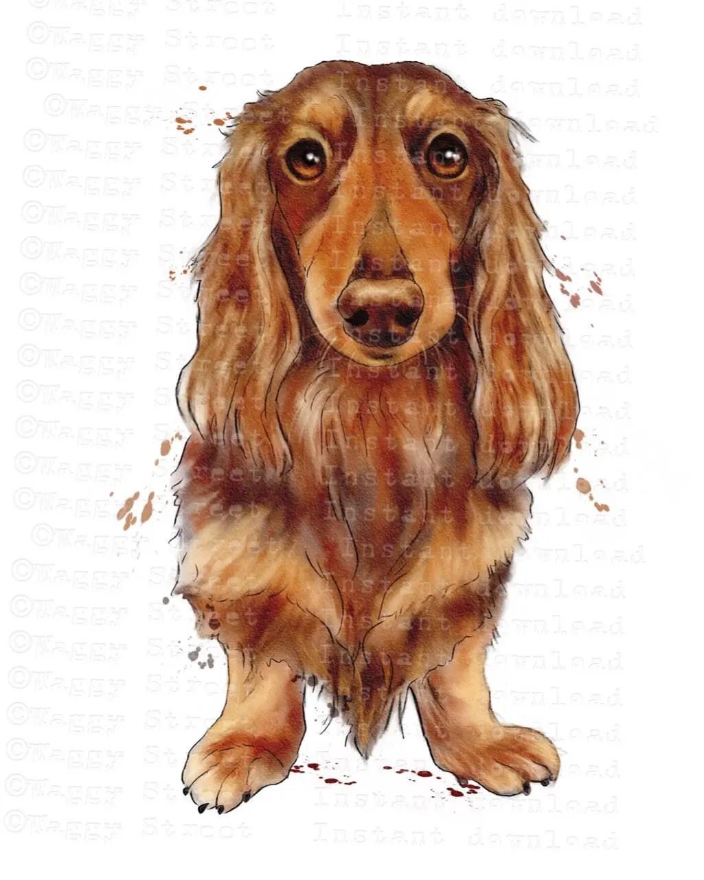 long haired dachshund dog clipart