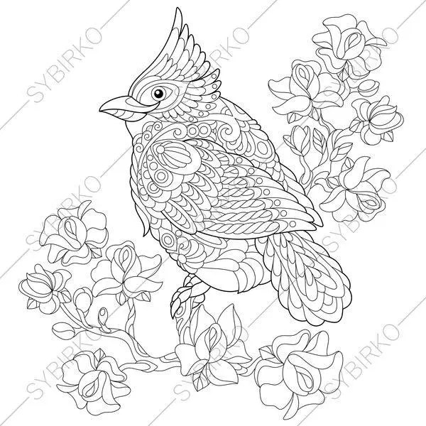 Red Cardinal Bird. Coloring Page. Animal coloring book pages