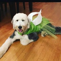 Tinkerbell Dog Costume Dog Halloween Costume Fairy Dog