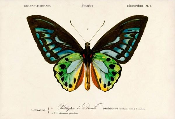 Butterfly Art Print Beautiful Poster