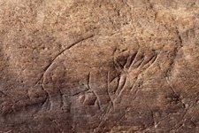 13,000 urteko mamuta Floridan