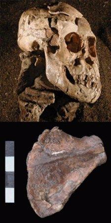 Lucy, ancestro de los homínidos,
