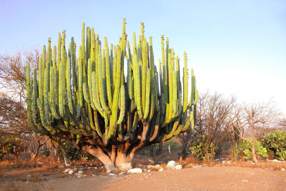 La flora  Messico Continentale  Messico