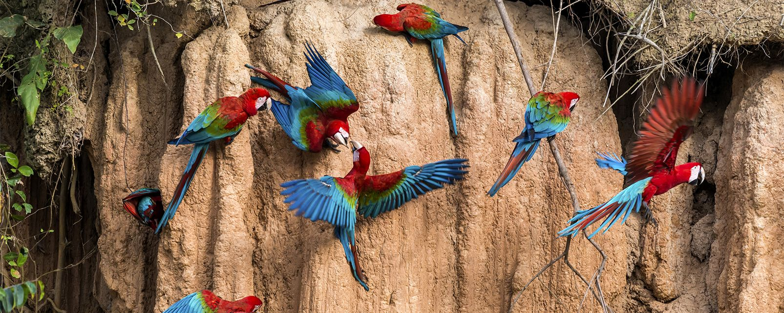 La selvaggia Amazzonia  Brasile
