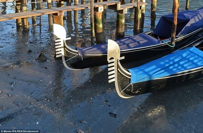 Thành phố nổi Venice có thể biến mất vì cạn nước