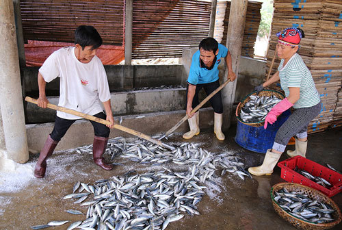 Health warning for fish from central Vietnam adds to uncertainty after toxic spill